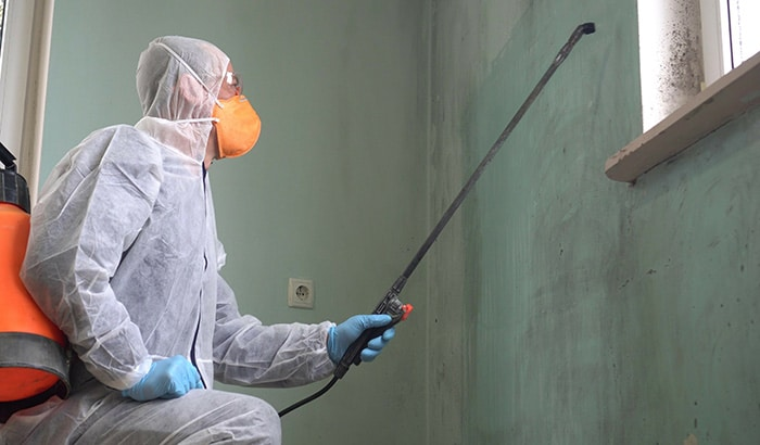 What is the Process for Mold Remediation